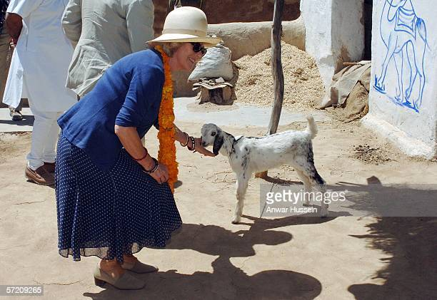 Camilla Duchess of Cornwall bends to pet a small goat at the village of Artiya on the tenth day of a 12 day official tour visiting Egypt Saudi Arabia...