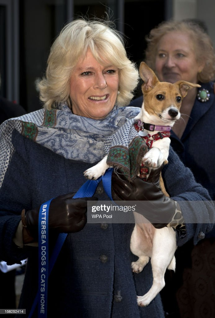 Camilla, Duchess of Cornwall carries her Jack Russell dog Bluebell as she arrives during a visit to Battersea Dog and Cats Home on December 12, 2012 in London, England. The Duchess of Cornwall as patron of Battersea Dog and Cats home visited with her two Jack Russell terriers Beth, a 3 month old who came to Battersea as an unwanted puppy in August 2011 and Bluebell a nine week old stray who was found wandering in a London Park in September 2012.