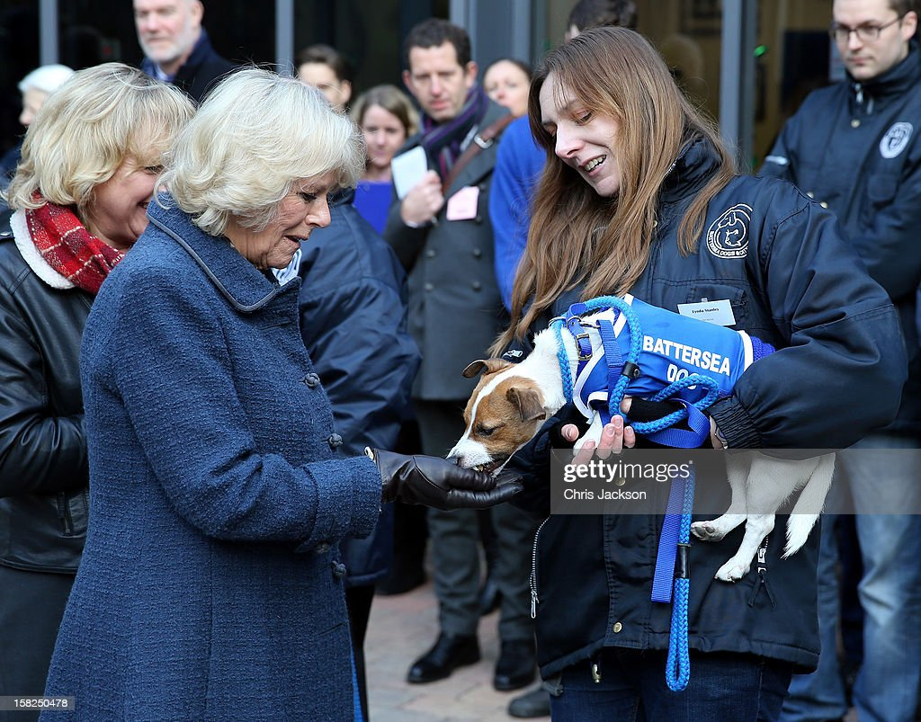Camilla, Duchess of Cornwall feeds a dog as she visits Battersea Dog and Cats Home on December 12, 2012 in London, England. Duchess of Cornwall as patron of Battersea Dog and Cats home visited with her two Jack Russell terriers Beth, a 3 month old who came to Battersea as an unwanted puppy in August 2011 and Bluebell a nine week old stray who was found wandering in a London Park in September 2012.