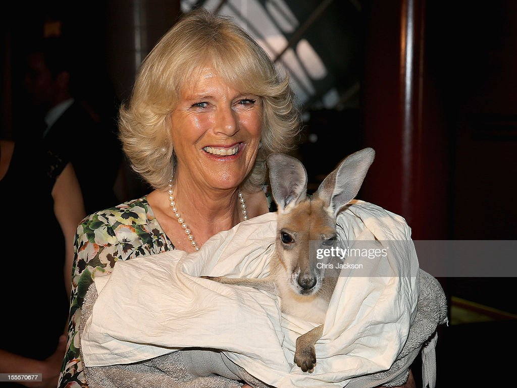 Camilla, Duchess of Cornwall holds a joey Kangaroo called Ruby Blue as she visits the Cattle Rancher's Hall of Fame on November 5, 2012 in Longreach, Australia. The Royal couple are in Australia on the second leg of a Diamond Jubilee Tour taking in Papua New Guinea, Australia and New Zealand.