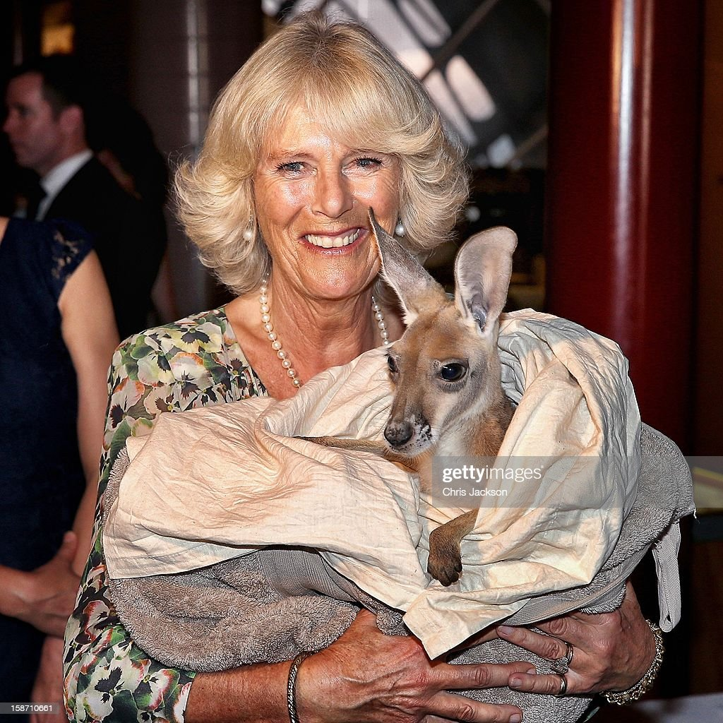 <a gi-track='captionPersonalityLinkClicked' href=/galleries/search?phrase=Camilla+-+Duchess+of+Cornwall&family=editorial&specificpeople=158157 ng-click='$event.stopPropagation()'>Camilla</a>, Duchess of Cornwall holds a joey Kangaroo called Ruby Blue as she visits the Cattle Rancher's Hall of Fame on November 5, 2012 in Longreach, Australia. The Royal couple are in Australia on the second leg of a Diamond Jubilee Tour taking in Papua New Guinea, Australia and New Zealand.