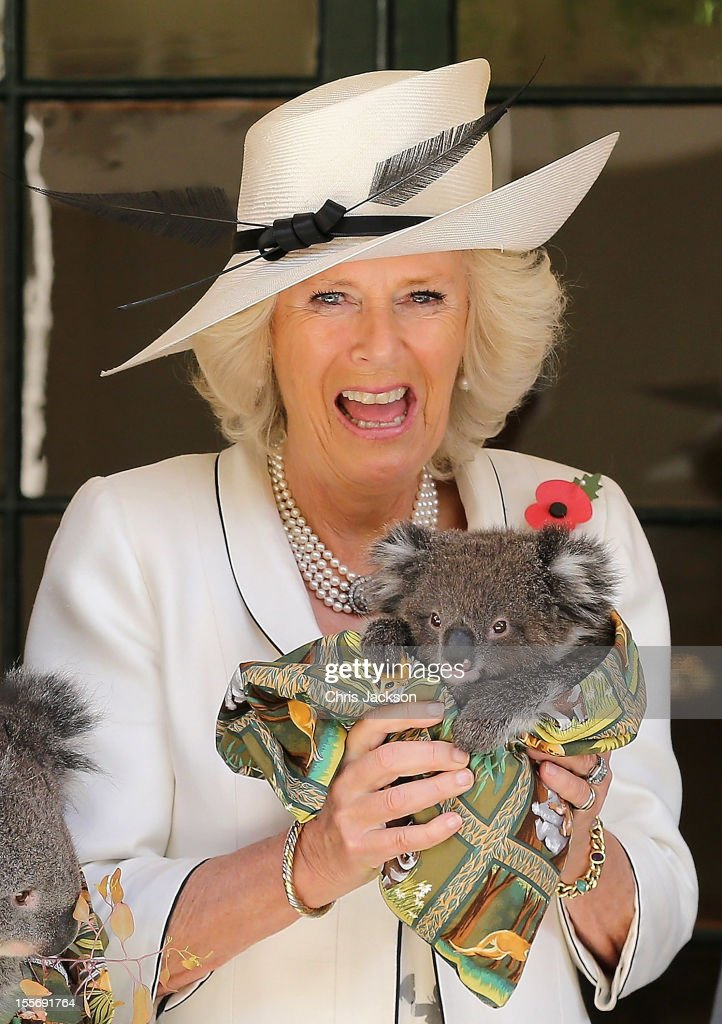Camilla, Duchess of Cornwall holds a koala called Matilda at Government House on November 7, 2012 in Adelaide, Australia. The Royal couple are in Australia on the second leg of a Diamond Jubilee Tour taking in Papua New Guinea, Australia and New Zealand.