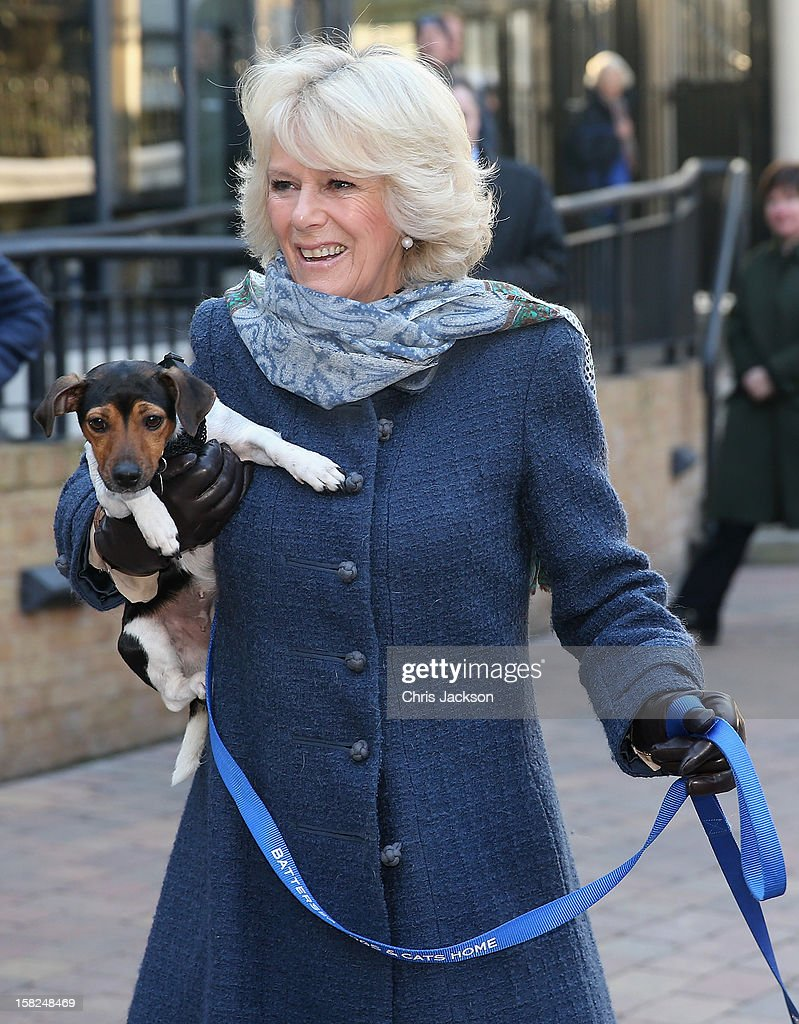 Camilla, Duchess of Cornwall holds up her 3 month old Jack Russell Terrier Beth as she visits Battersea Dog and Cats Home on December 12, 2012 in London, England. The Duchess of Cornwall as patron of Battersea Dog and Cats home visited with her two Jack Russell terriers Beth, a 3 month old who came to Battersea as an unwanted puppy in August 2011 and Bluebell a nine week old stray who was found wandering in a London Park in September 2012.