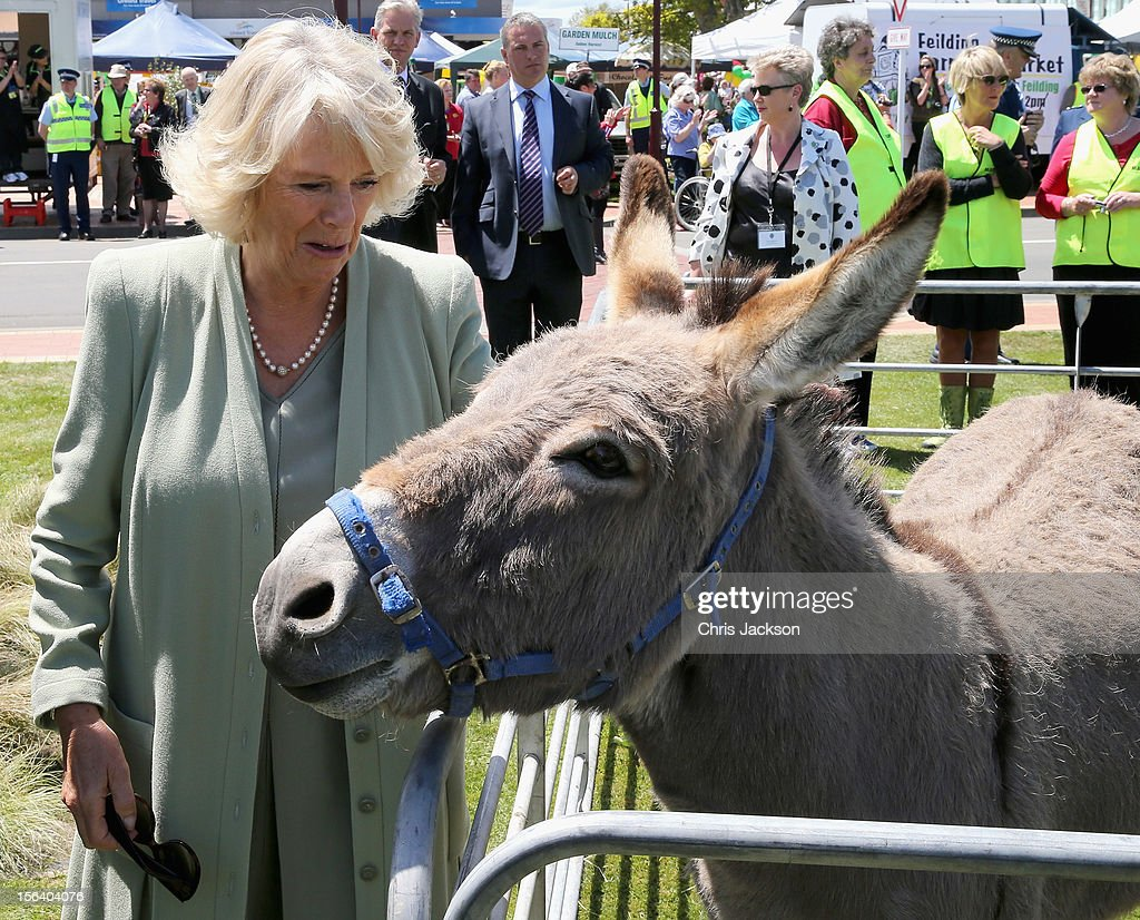<a gi-track='captionPersonalityLinkClicked' href=/galleries/search?phrase=Camilla+-+Duchess+of+Cornwall&family=editorial&specificpeople=158157 ng-click='$event.stopPropagation()'>Camilla</a>, Duchess of Cornwall pats a donkey on November 14, 2012 in Feilding, New Zealand. The Royal couple are in New Zealand on the last leg of a Diamond Jubilee that takes in Papua New Guinea, Australia and New Zealand.