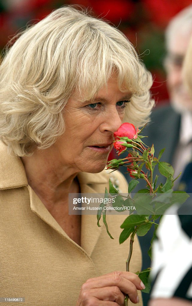 Camilla Duchess of Cornwall smells a rose as she tours Sandringham Flower Show on the Sandringham Estate on July 25 2007 in Sandringham England