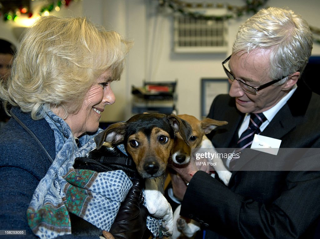 Camilla, Duchess of Cornwall stands next to television presenter Paul O'Grady while holding her two adopted dogs Bluebell and Beth during a visit to Battersea Dog and Cats Home on December 12, 2012 in London, England. The Duchess of Cornwall as patron of Battersea Dog and Cats home visited with her two Jack Russell terriers Beth, a 3 month old who came to Battersea as an unwanted puppy in July 2011 and Bluebell a nine week old stray who was found wandering in a London Park.