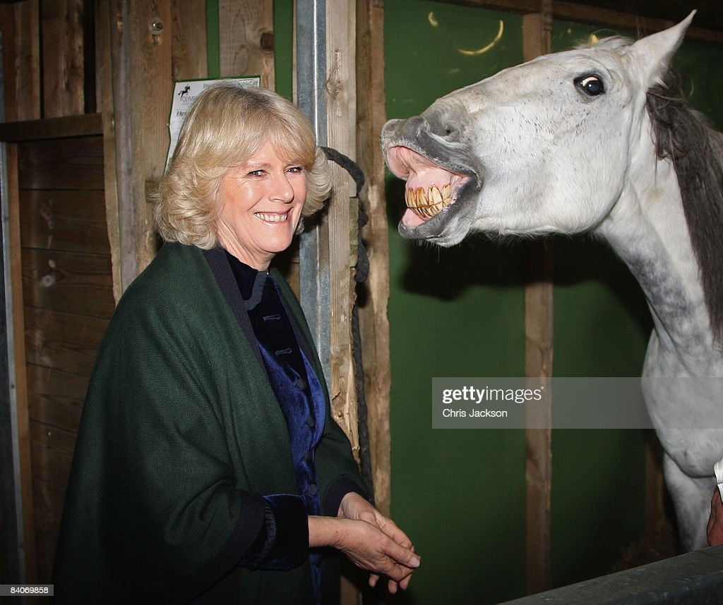 Camilla, Duchess of Cornwall tours the stables backstage at the Olympia Horse Show on December 17, 2008 in London, England. The Duchess will meet competitors and the horses backstage at the event as well as presenting awards.