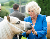 Camilla Duchess of Cornwall views some Welsh Hill Ponies during a visit to Blaenau Mawr Farm on July 7 2016 in Crickhowell Wales