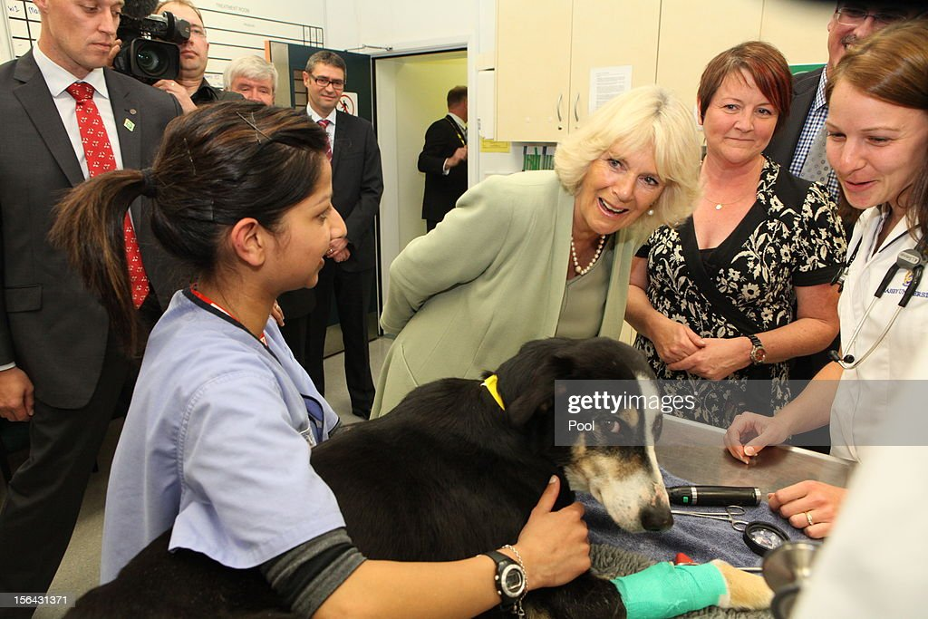 <a gi-track='captionPersonalityLinkClicked' href=/galleries/search?phrase=Camilla+-+Duchess+of+Cornwall&family=editorial&specificpeople=158157 ng-click='$event.stopPropagation()'>Camilla</a>, Duchess of Cornwall visits Massey University on November 15, 2012 in Palmerston North, New Zealand. Britain's Prince Charles and his wife <a gi-track='captionPersonalityLinkClicked' href=/galleries/search?phrase=Camilla+-+Duchess+of+Cornwall&family=editorial&specificpeople=158157 ng-click='$event.stopPropagation()'>Camilla</a> are in New Zealand on the last leg of a Diamond Jubilee Tour that takes in Papua New Guinea, Australia and New Zealand.