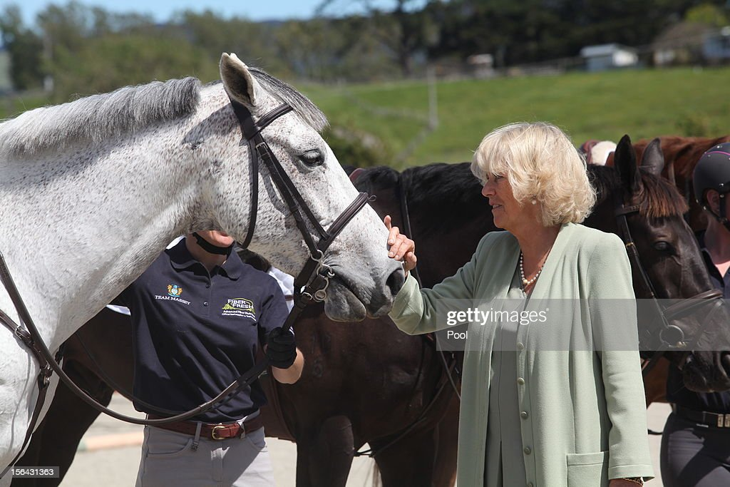 <a gi-track='captionPersonalityLinkClicked' href=/galleries/search?phrase=Camilla+-+Duchess+of+Cornwall&family=editorial&specificpeople=158157 ng-click='$event.stopPropagation()'>Camilla</a>, Duchess of Cornwall visits the Equine Research Centre at Massey University on November 15, 2012 in Palmerston North, New Zealand. Britain's Prince Charles and his wife <a gi-track='captionPersonalityLinkClicked' href=/galleries/search?phrase=Camilla+-+Duchess+of+Cornwall&family=editorial&specificpeople=158157 ng-click='$event.stopPropagation()'>Camilla</a> are in New Zealand on the last leg of a Diamond Jubilee Tour that takes in Papua New Guinea, Australia and New Zealand.
