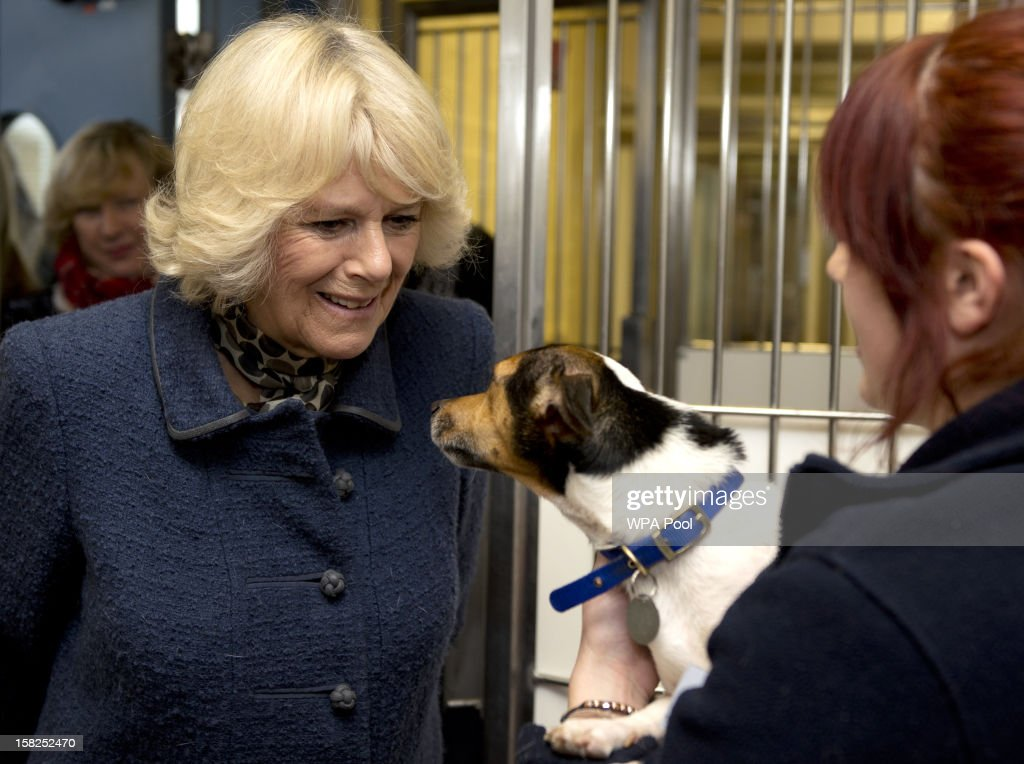 Camilla, Duchess of Cornwall walks into a dog kennel where Kitty Ward (R) holds Misty, an eight-year-old Jack Russell Terrier during a visit to Battersea Dog and Cats Home on December 12, 2012 in London, England. The Duchess of Cornwall as patron of Battersea Dog and Cats home visited with her two Jack Russell terriers Beth, a 3 month old who came to Battersea as an unwanted puppy in August 2011 and Bluebell a nine week old stray who was found wandering in a London Park in September 2012.