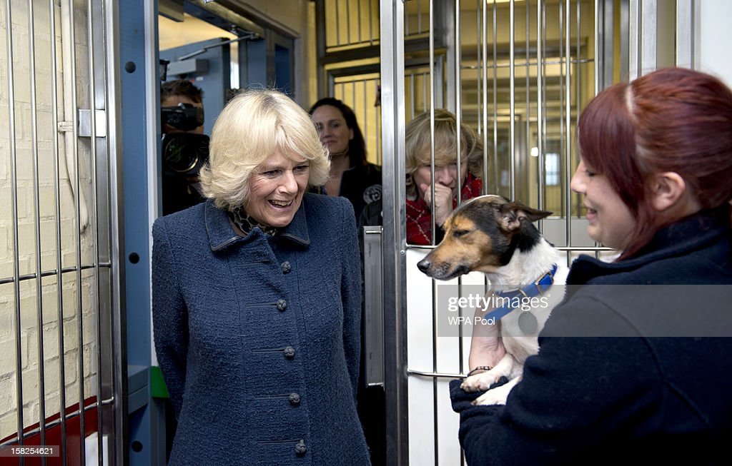 Camilla, Duchess of Cornwall walks into a dog kennel where Kitty Ward (R) holds Misty, an eight-year-old Jack Russell Terrier during a visit to Battersea Dog and Cats Home on December 12, 2012 in London, England. The Duchess of Cornwall as patron of Battersea Dog and Cats home visited with her two Jack Russell terriers Beth, a 3 month old who came to Battersea as an unwanted puppy in July 2011 and Bluebell a nine week old stray who was found wandering in a London Park.