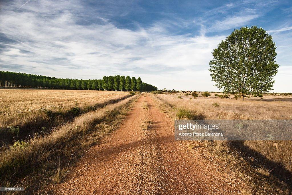Camino : Stock Photo