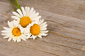 camomile flowers on rustic wooden planks