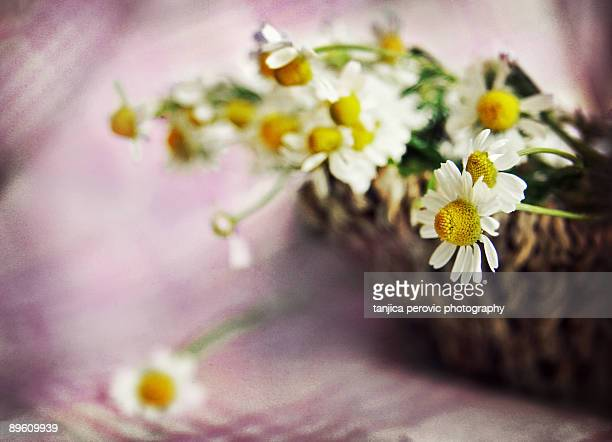 Camomile in a basket