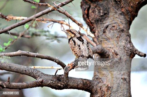 Camouflage : Stock Photo