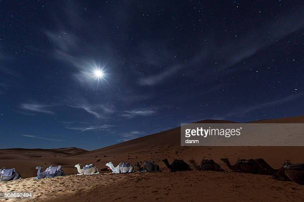 Camp in Sahara Desert in night with moon as star and moving stars