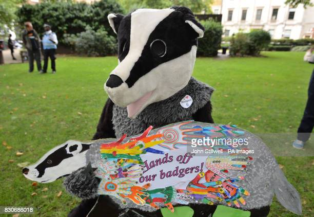 Campaigner Frank Wood in a fullsize badge outfit in Cavendish Square London before a march to Downing Street in protest against badger culling fox...