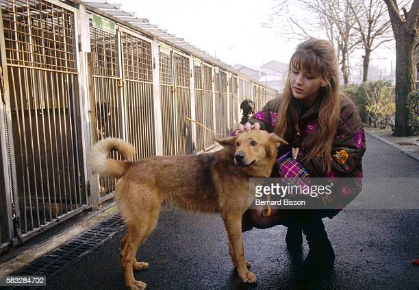 Campaigning against the abandonment of cats and dogs French actress Sophie Marceau poses with a dog as she visits the SPA shelter of Genevilliers...
