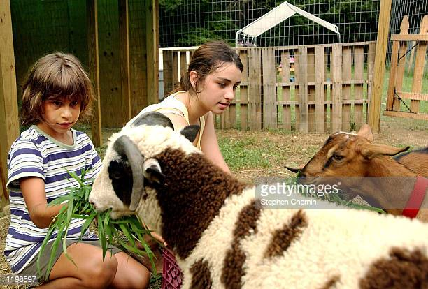 Campers feed goats in the petting zoo at the JV Mara camp August 1 2002 in Putnam Valley New York The CYO 'Little Heroes' program is part of a...