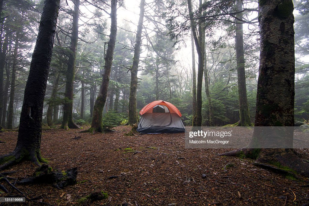 Camping in forest : Stock Photo