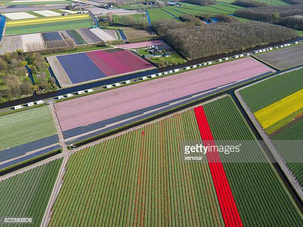 camping site besides tulip fields in Holland