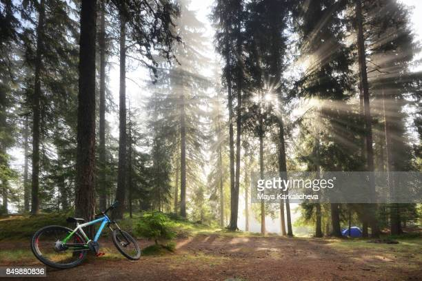Campsite in the woodland with sunbeam through pine trees, mountain bike and tent
