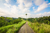 campuhan path at bali countryside, indonesia