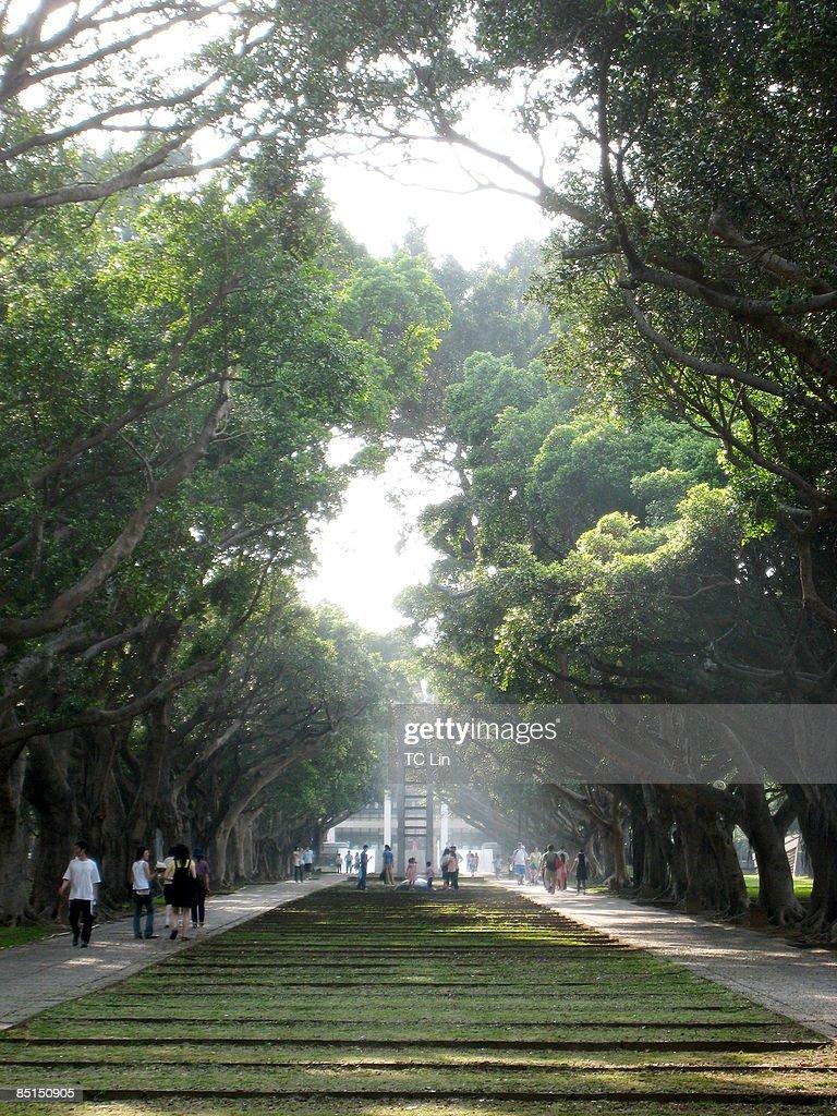 Campus lane : Stock Photo
