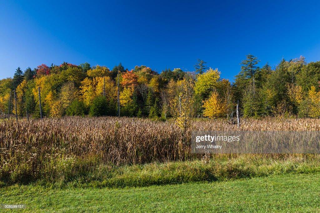 Canaan Valley in Autumn, WV : Foto de stock