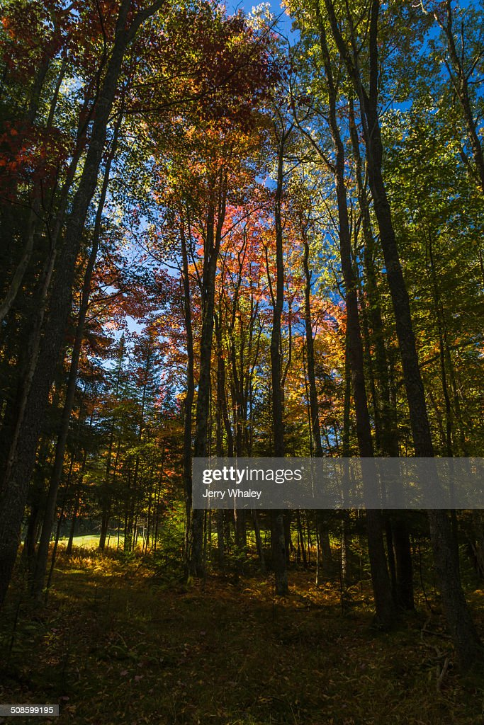 Canaan Valley in Autumn, WV : Stock Photo