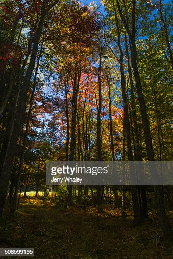 Canaan Valley in Autumn, WV : Foto de stock