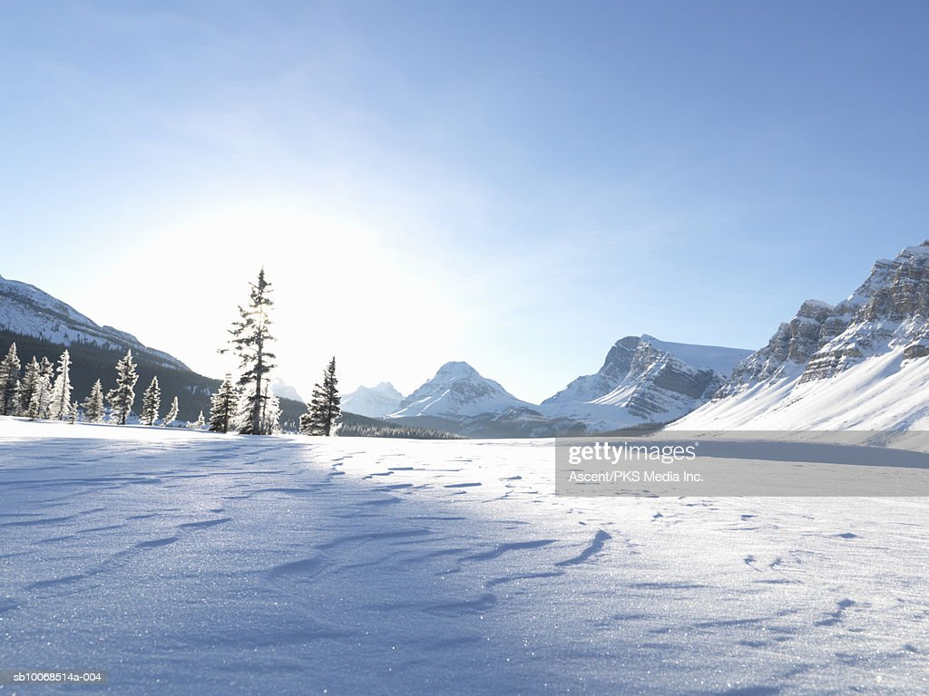 Canada, Alberta, Banff National Park, Patterns in snow and frost on trees at frozen Bow Lake : Stock Photo
