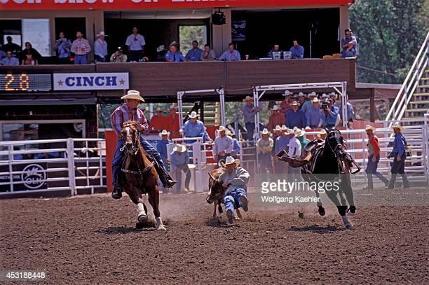 Canada Alberta Calgary Calgary Stampede Stampede Scene Steer Wrestling
