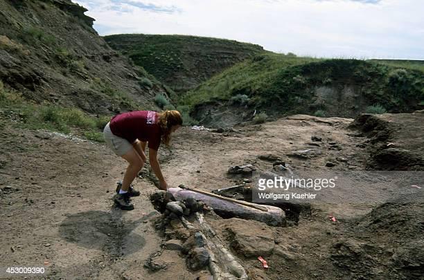 Canada Alberta Drumheller Royal Tyrrell Museum Dinosaur Dig Dig Coordinator April Rasmussen Bones