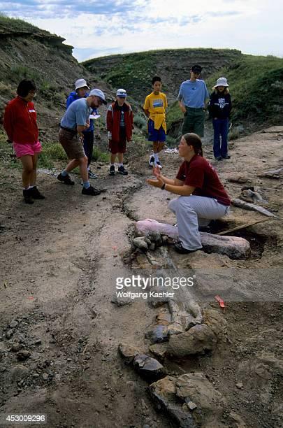 Canada Alberta Drumheller Royal Tyrrell Museum Dinosaur Dig Tourists Field Tech Jessica Hawthorn