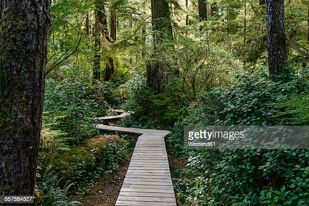 Canada, British Columbia, Vancouver Island, Tofino, Schooner Cove Hiking Trail