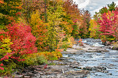 a river flows in a forest full of red maple trees and yellow birches in the heart of the Quebec autumn