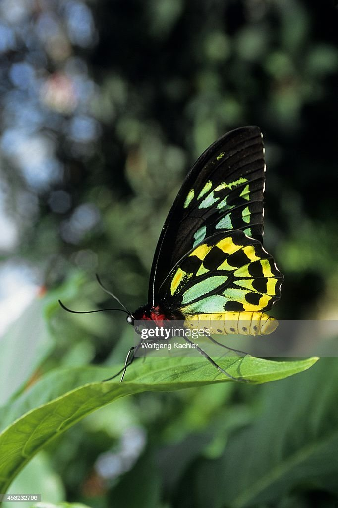 canada ontario niagara falls butterfly conservatory. Black Bedroom Furniture Sets. Home Design Ideas