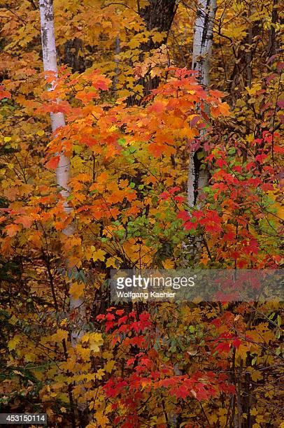 Canada Quebec Laurentian Monttremblant Park Fall Scene