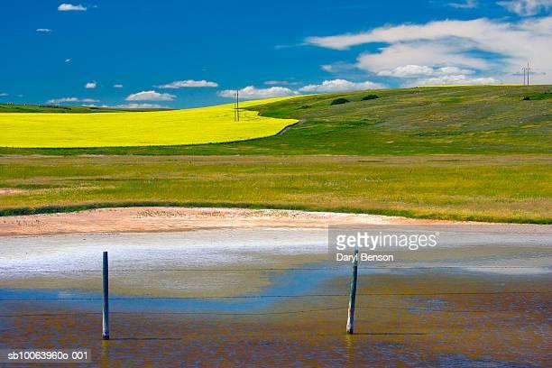 Canada, Saskatchewan, Alkali lake edge and Canola fields