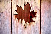 Maple Lear displayed on wooden board for Canada Day, July 1