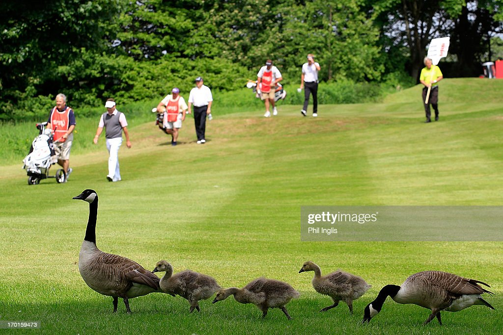 Canadian geese on the 3rd hole during the third round of the ISPS Handa PGA Seniors Championship played at De Vere Mottram Hall on June 8, 2013 in Wilmslow, England.