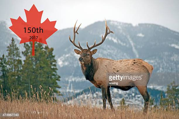 Canadian Maple Leaf in the Rocky Mountains  Anniversary 2017- 150th