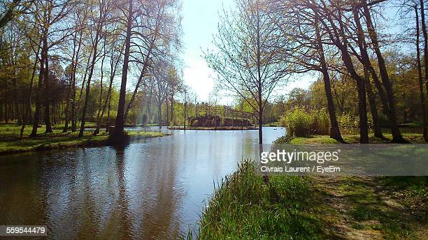 Canal Amidst Trees In Park