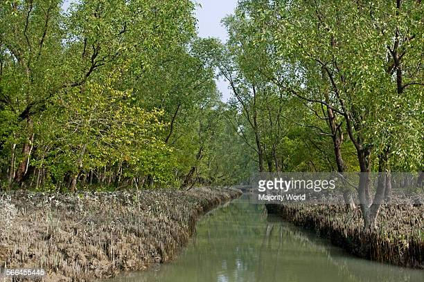 A canal in Nijhum Dwip located in the shallow estuary of the Bay of Bengal south of Noakhali district Bangladesh December 9 2009 The Forest...