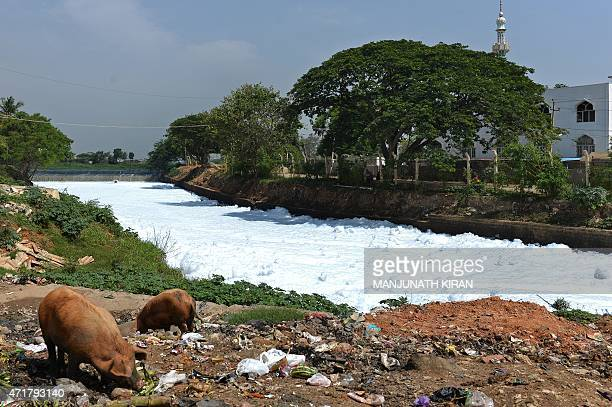 A canal which once carried water from Bellandur Lake to Varthur Lake is filled with froth emanating from sewage in east Bangalore on May 1 2015 The...
