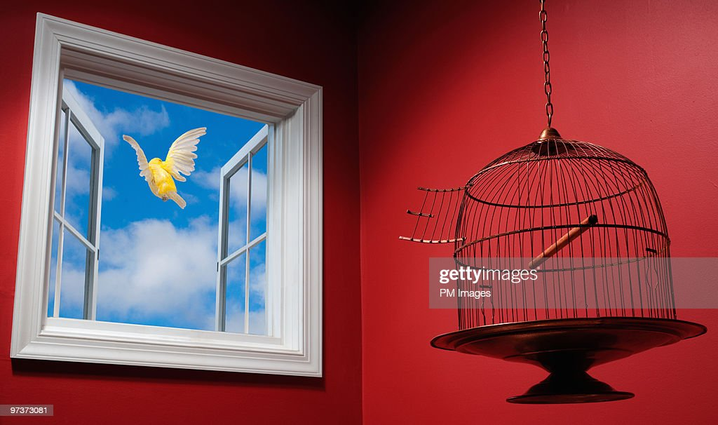 Canary escaping cage, flying out open window