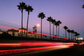 Canary Island palms tower above Melrose Avenue after the sun set on the popular 20th Century symbols of southern California which are fading into...
