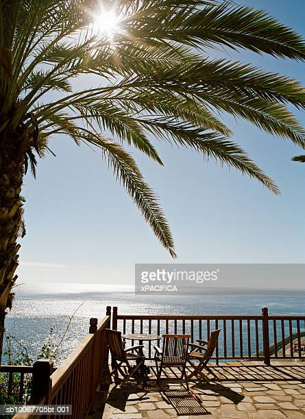 Canary Islands, La Gomera, palm tree over balcony by ocean